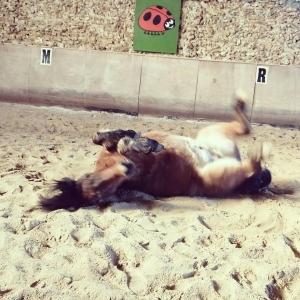 Delphine chevaux3