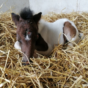 Equitherapie Yonne-bebe poney-Karishma Miracle-