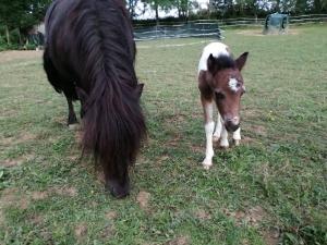 Equitherapie maman Ponio et bebe poney Karishma