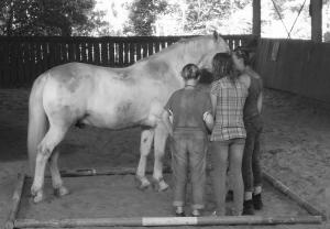 Faire a cheval Equiterapie exercice au sol
