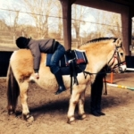 Faire a cheval equitherapie relaxation sur coco