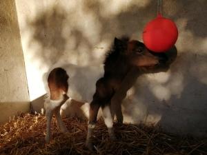 KARISHMA et le ballon