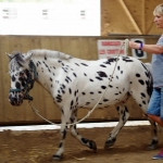 Equiterapie dans l'Yonne exercice cheval manege