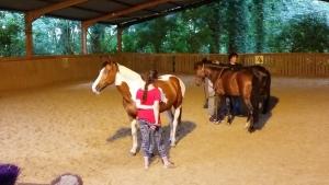 Equiterapie dans l'Yonne travail cheval