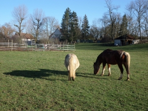 Equitherapie Yonne cours Auxerre Faire a cheval