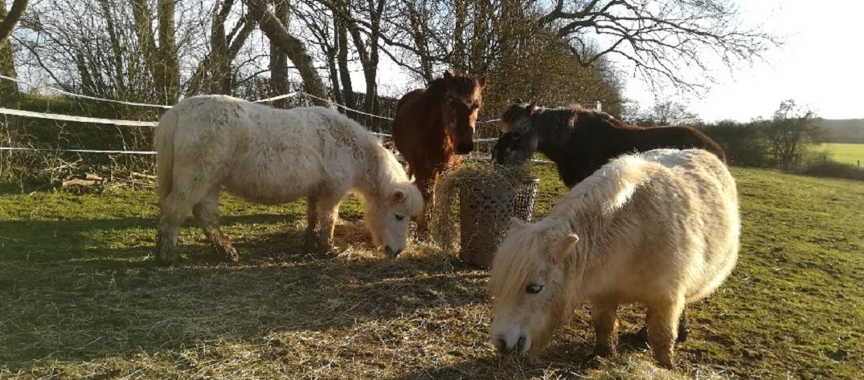 Equiterapie-faire-a-cheval-Yonne-Auxerre